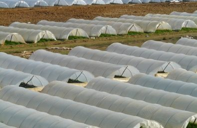 agriculture-nursery-greenhouse-cultivation_121-64394